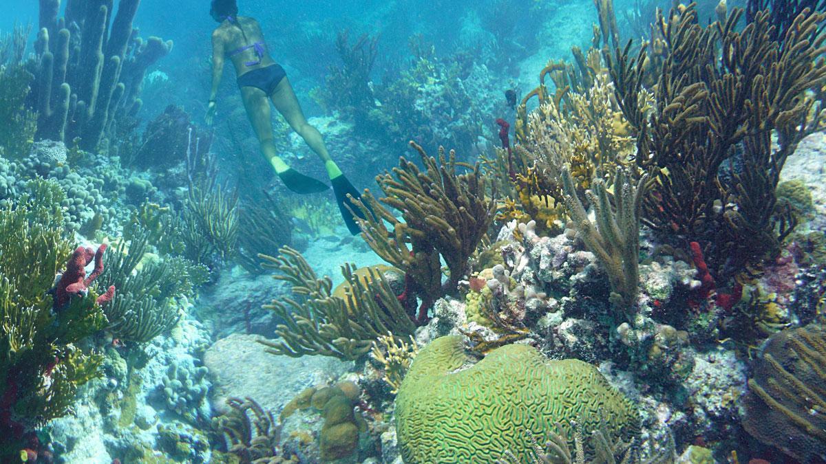 10 best St John snorkeling spots