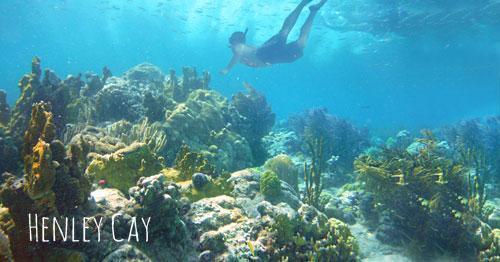Henley Cay St John snorkeling
